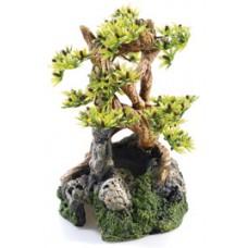 Bonsai On Rocks