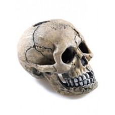 Spooky Skull Hide